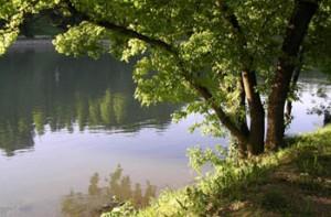 albero-fiume