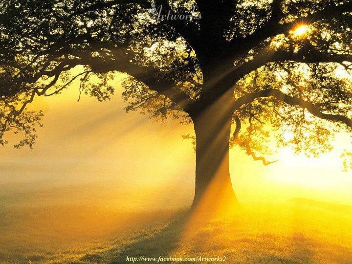 Signore, mia luce e mia salvezza