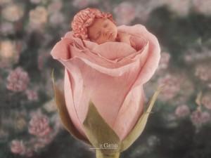 bambina dentro la rosa