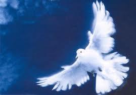 spirito santo (3)