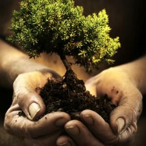 albero1 (2)