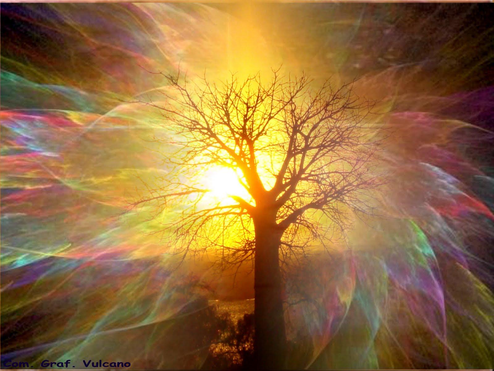 albero (3)
