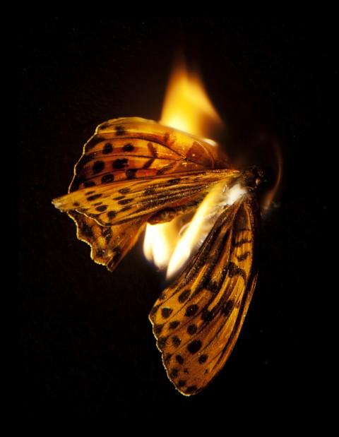 farfalla - fuoco