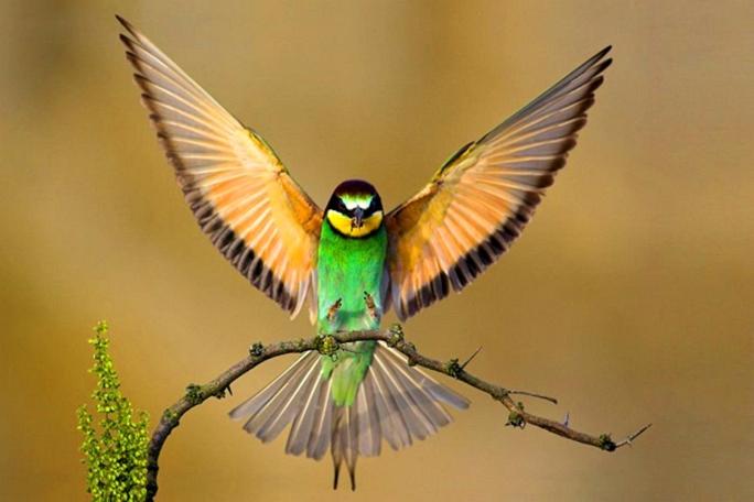 spettacolari_e_bellissimi_uccelli_14