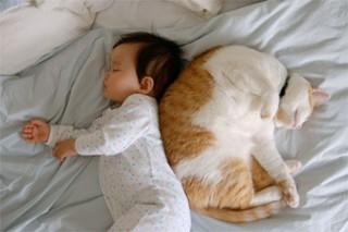 gatto che dorme con bimbo